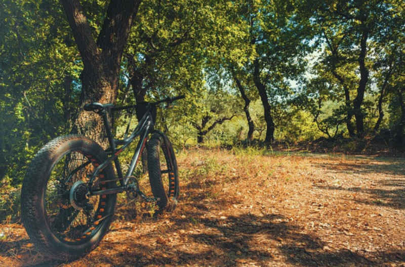 What Is A Fat Bike- forest